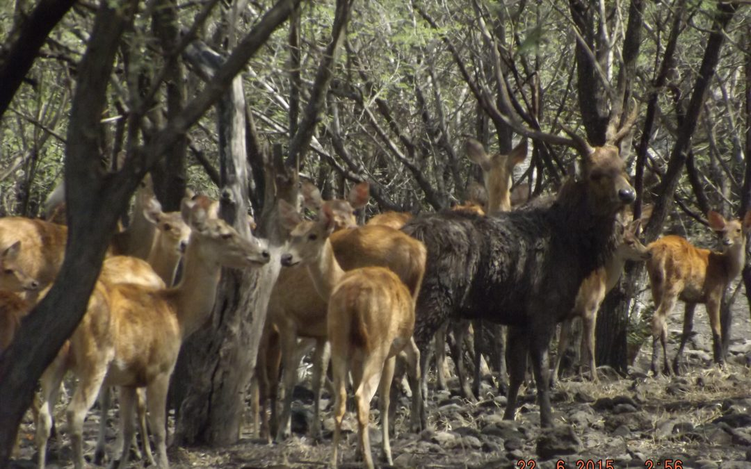 1 Day tour : Baluran national park from Banyuwangi city