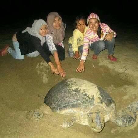5D/4N Days – Surabaya – bromo – Rajegwesi village – sukamade – ijen – drop off  harbor / Bali